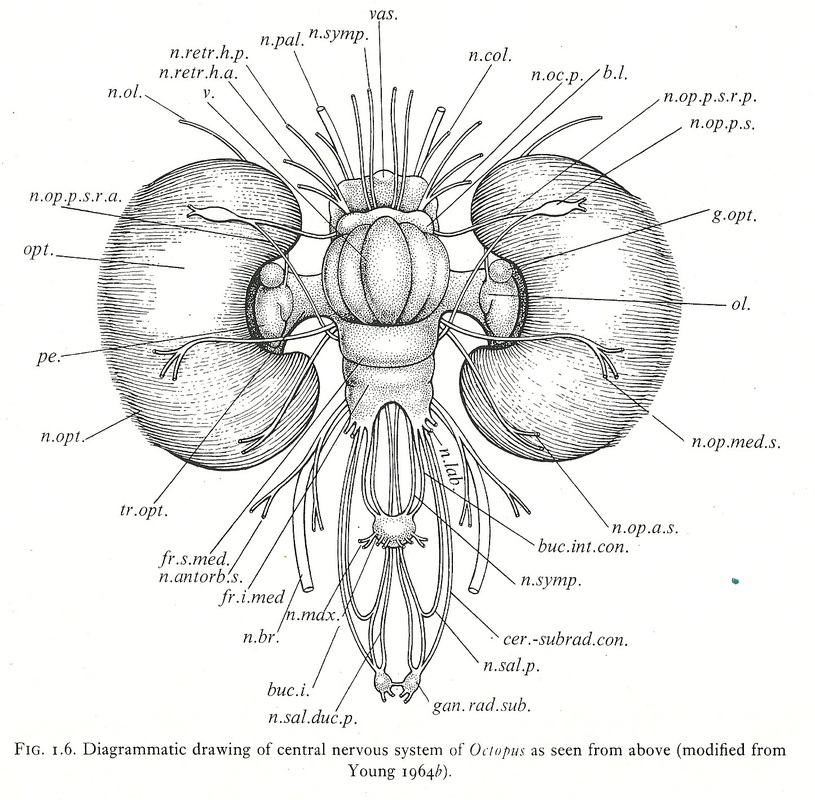 Image of: Worksheet On The Side Of This Webpage You Will Find The Nine Phyla From The Kingdom Animalia Which Will Lead You To Brief Summary And An In Depth Of Certain Youtube Evolution Of The Muscular System Home